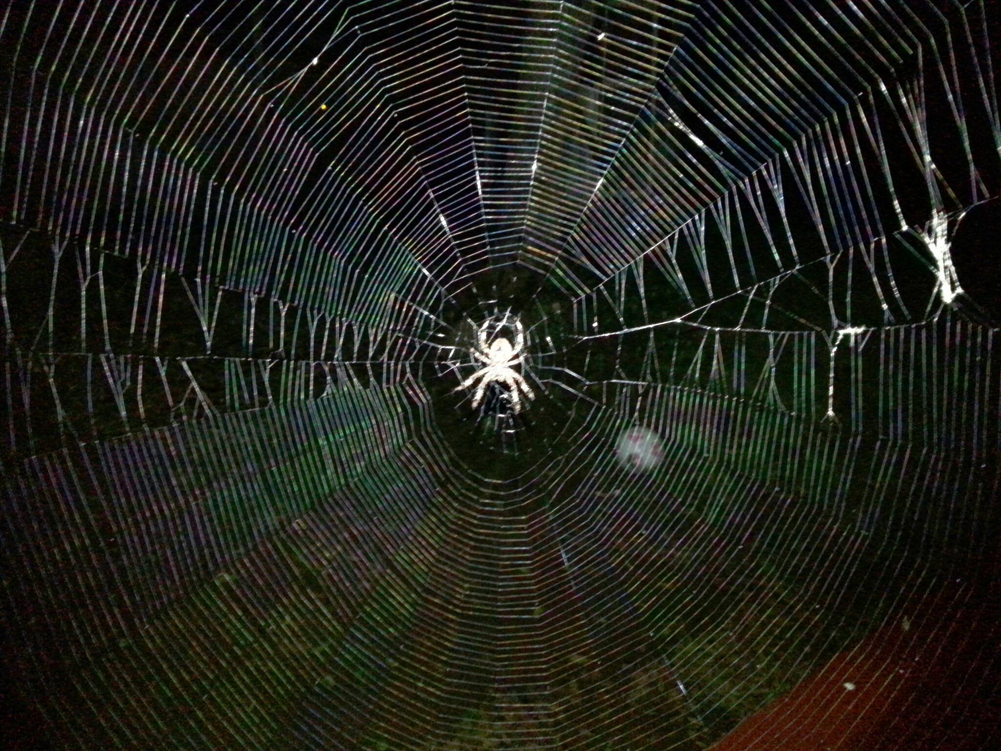 #spider #halloween #poisonous #creepy #web #spiderweb