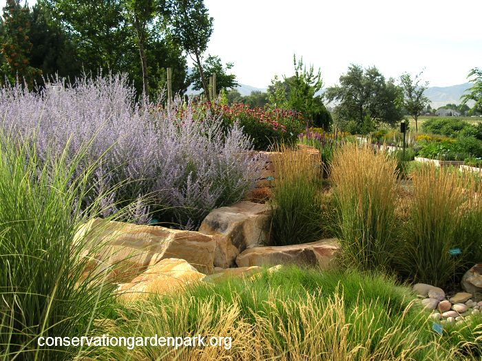 Garden loop stipa grass in front russian sage purple for Large grasses for gardens