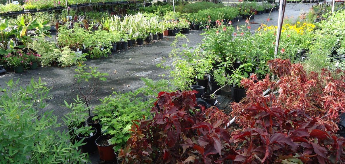 4f7a155d1fdf11a88c0e921fb3be98d8 - City Park Botanical Gardens Plant Sale