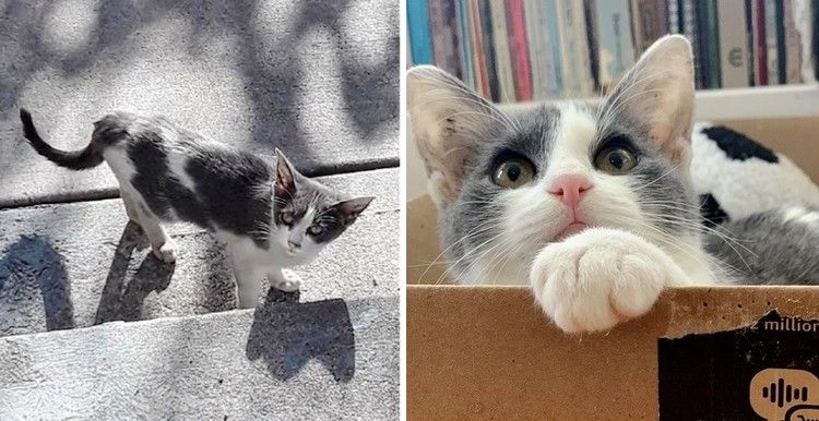 Stray Kitten Wanders From House To House Until She Finds Someone Who Won T Leave Her Behind Love Meow Kittens Little Kitty Alley Cat