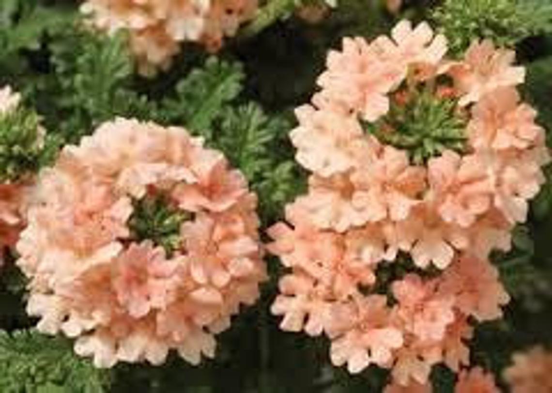 Pin Auf Garten Gestaltung Anbau