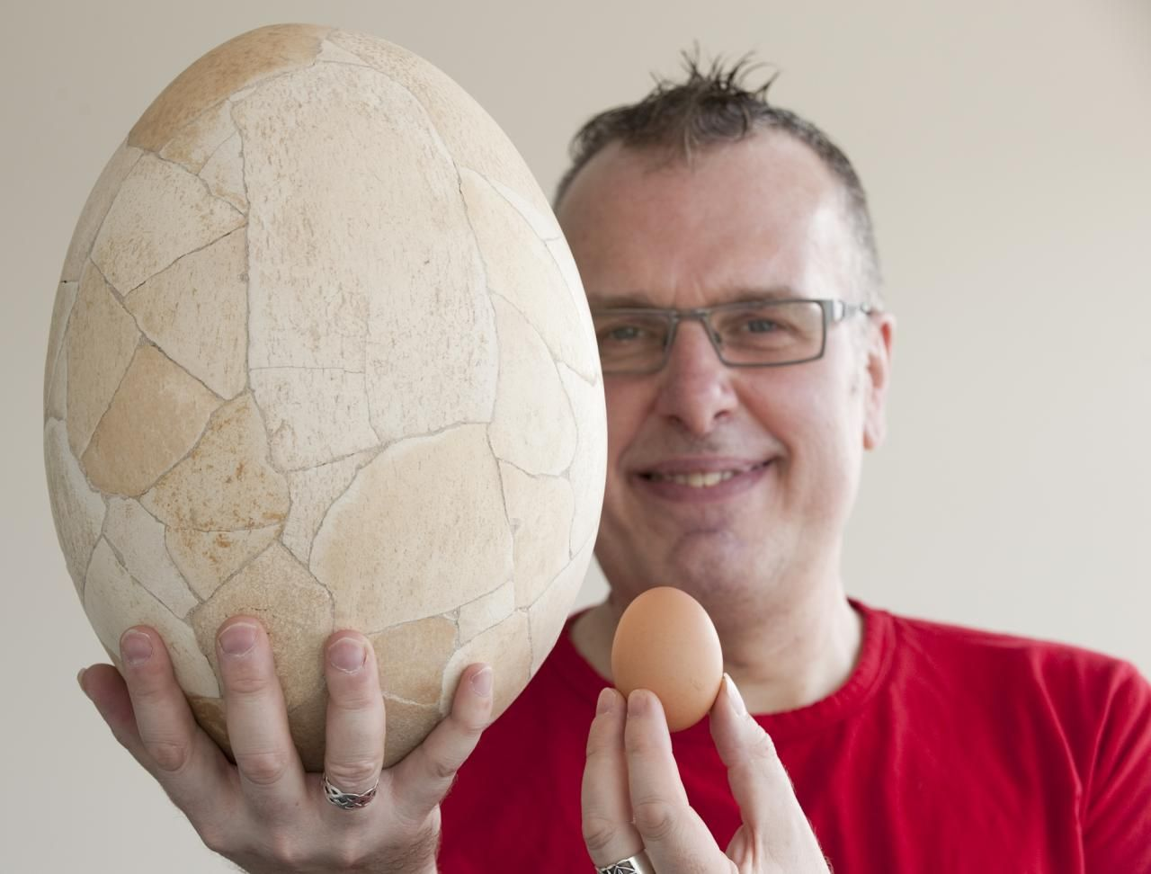 Graham Rowe, University of Derby Programme Leader for Biology, with the egg of the extinct elephant bird of Madagascar and an ordinary chicken's egg. #derbyuni