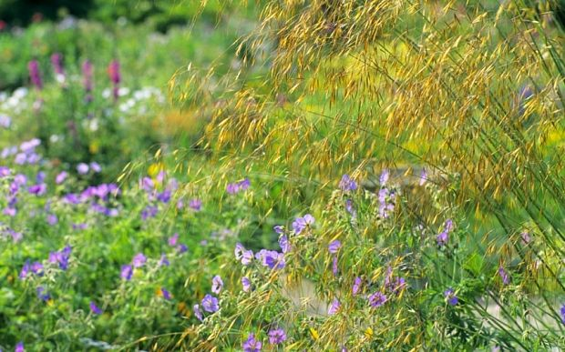 Great wildflower meadow article
