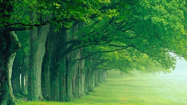 Click To Free Download The Wallpaper All Green Trees In One Line And Living Toward One Direction A Hd Nature Wallpapers Green Nature Wallpaper Nature Desktop