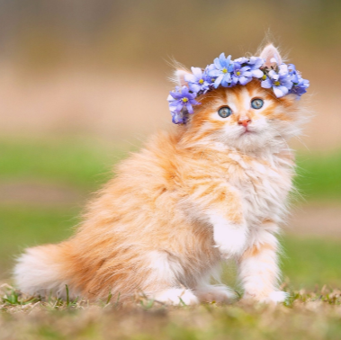 What Is Cuter A Puppy Or A Kitten Enjoy Cute Cat Dog Hd Wallpapers With Every New Tab Kittens Cutest Fluffy Kittens Fluffy Cat Breeds