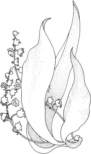 Lily Of The Valley 1 | Lily of the valley, Coloring pages ...
