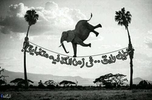 خليك رايق في زمان الكل فيه متضايق Funny Arabic Quotes Animals Photo Quotes