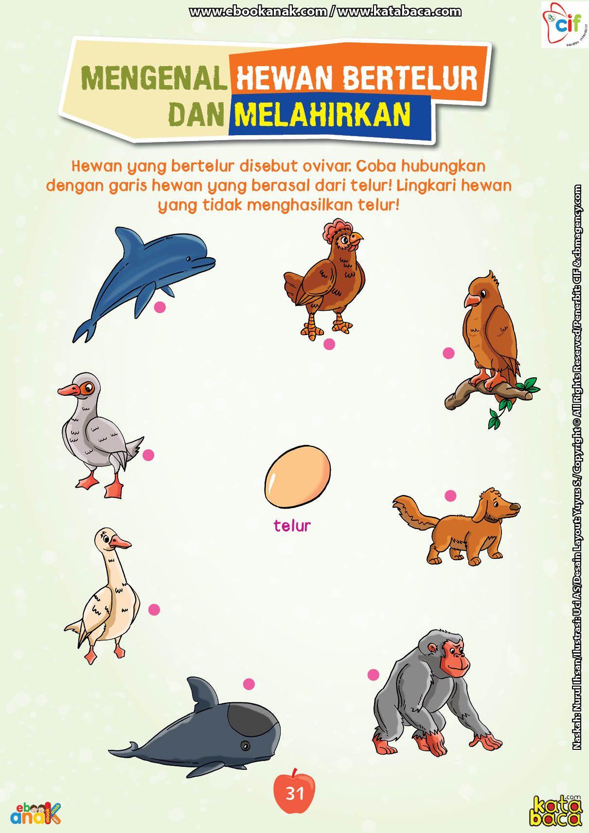 Hewan Bertelur Dan Melahirkan : hewan, bertelur, melahirkan, Mengenal, Hewan, Bertelur, Melahirkan, Hewan,, Kelas,, Sains