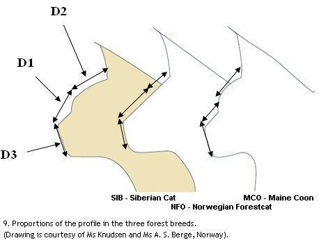Siberian Cat Profile Pesquisa Google Norwegian Forest Cat Turkish Van Cats Cat Profile