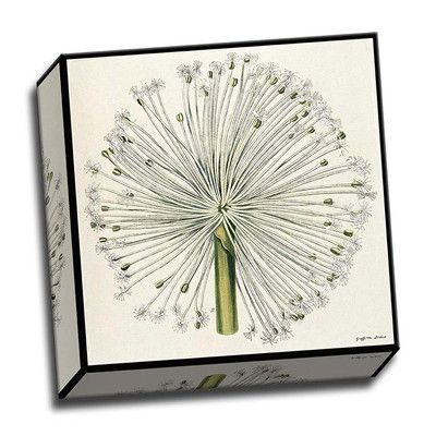 Picture it on Canvas 'Haemanthus Cllaris' Graphic Art on Wrapped Canvas