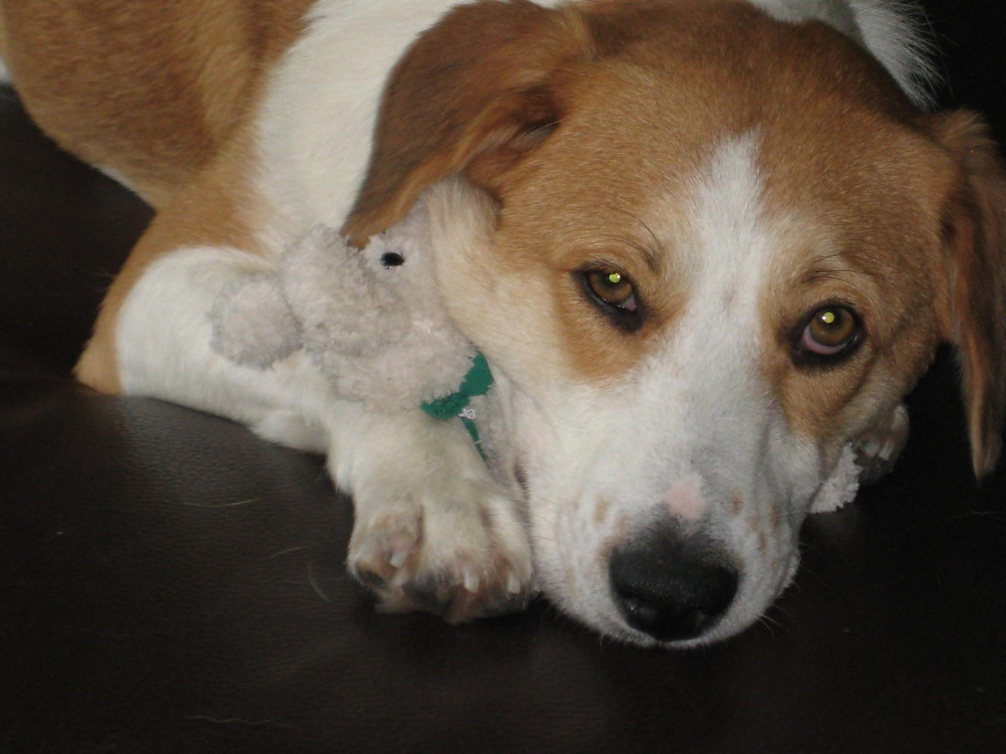 Stella Mischling Pawshake Hunde Fotos