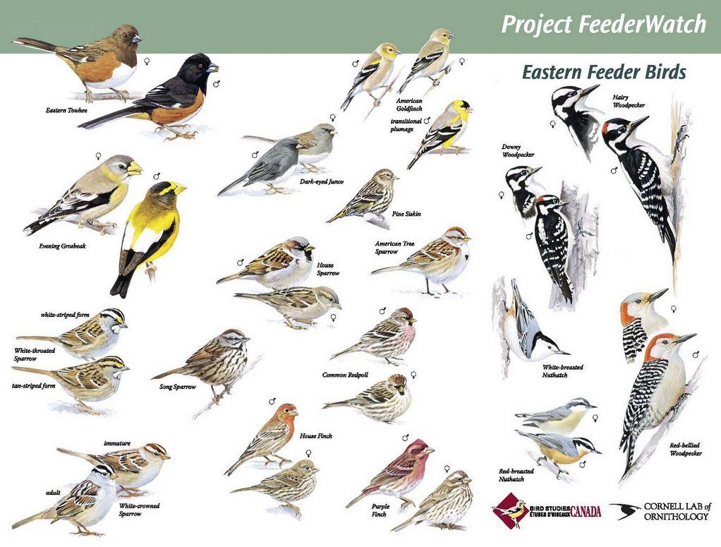 Beau Identify Birds