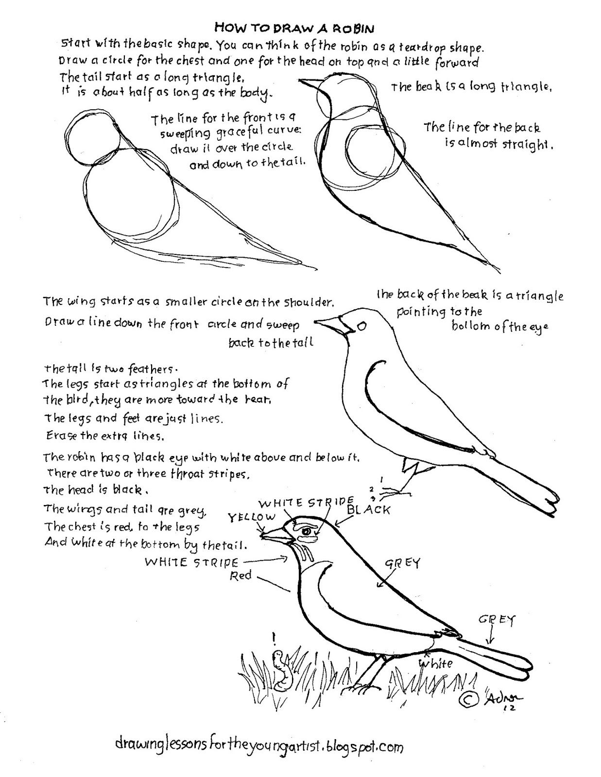 How To Draw A Robin Bird Drawing Worksheet For A Young