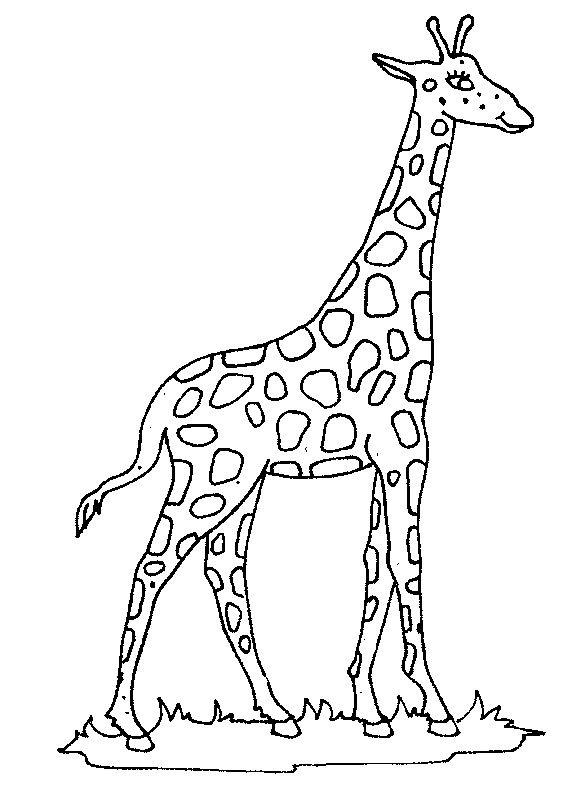 Coloring Page Giraffe Giraffe Giraffe Coloring Pages Giraffe Colors Giraffe