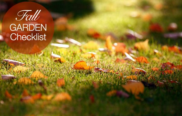 Fall Garden Checklist: 10 Things... | The Garden Glove
