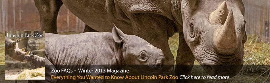 Lincoln Park Zoo Chicago Free And Open To All 365 Days A Year Lincoln Park Zoo Chicago Lincoln Park Zoo Chicago Fun