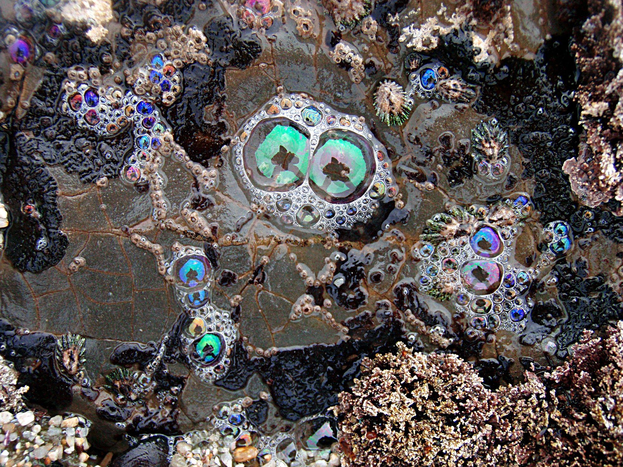 Tom Clark Clarice Lispector Mine Of Mirrors Artsy Tom Clark Tide Pools