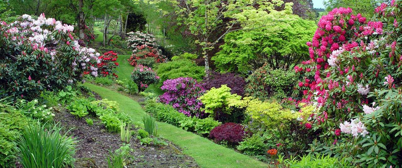Rhododendron Japanese Maple Border Yahoo Image Search Results