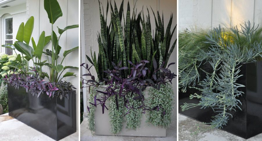 embracing container gardens part one fleurs exotiques. Black Bedroom Furniture Sets. Home Design Ideas