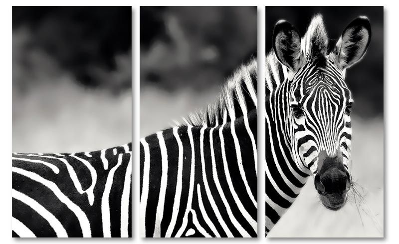 Zwart wit zebra wanddecoratie op canvas foto schilderijen dieren zwart wit zebra wanddecoratie op canvas thecheapjerseys Gallery
