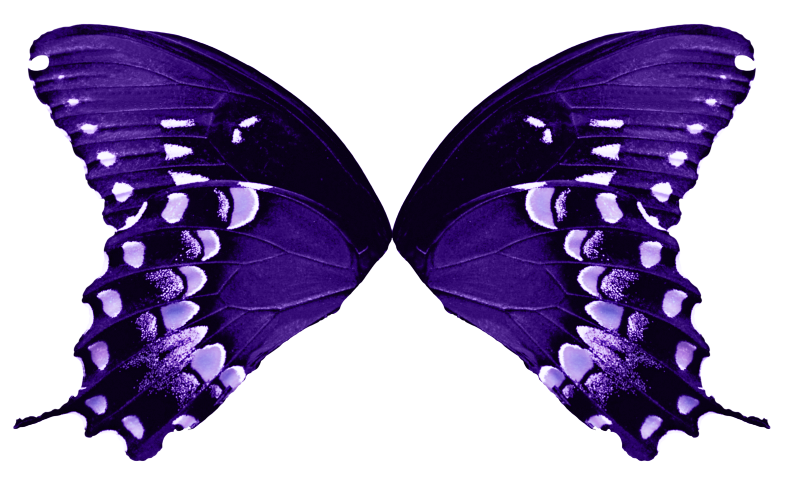 Butterfly Wings Light Purple By Fairyfindings On Deviantart Butterfly Wings Purple Butterfly Wings Blue Fairy Wings