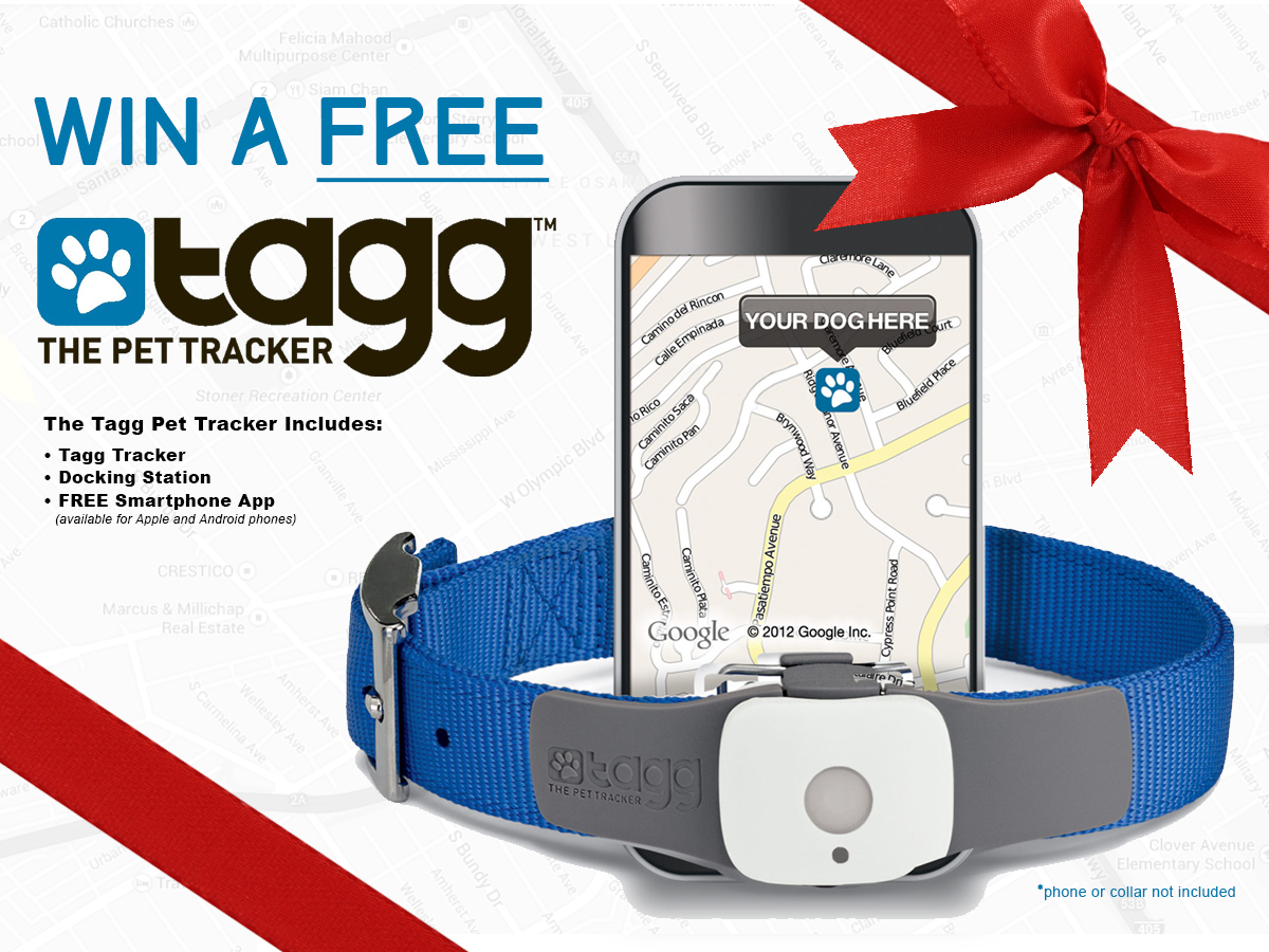 Win a FREE Tagg Pet Tracker & Activity Monitor with 2