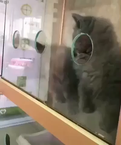 Best Funny Cats Watch Out, I'm Outa Here... These Holes Aren't Stopping Me Watch Out, I'm Outa Here... These Holes Aren't Stopping Me   #funnypetgifs #funny #petgifs #gifs #cats #funnycats #funnycatgifs #kitten 6