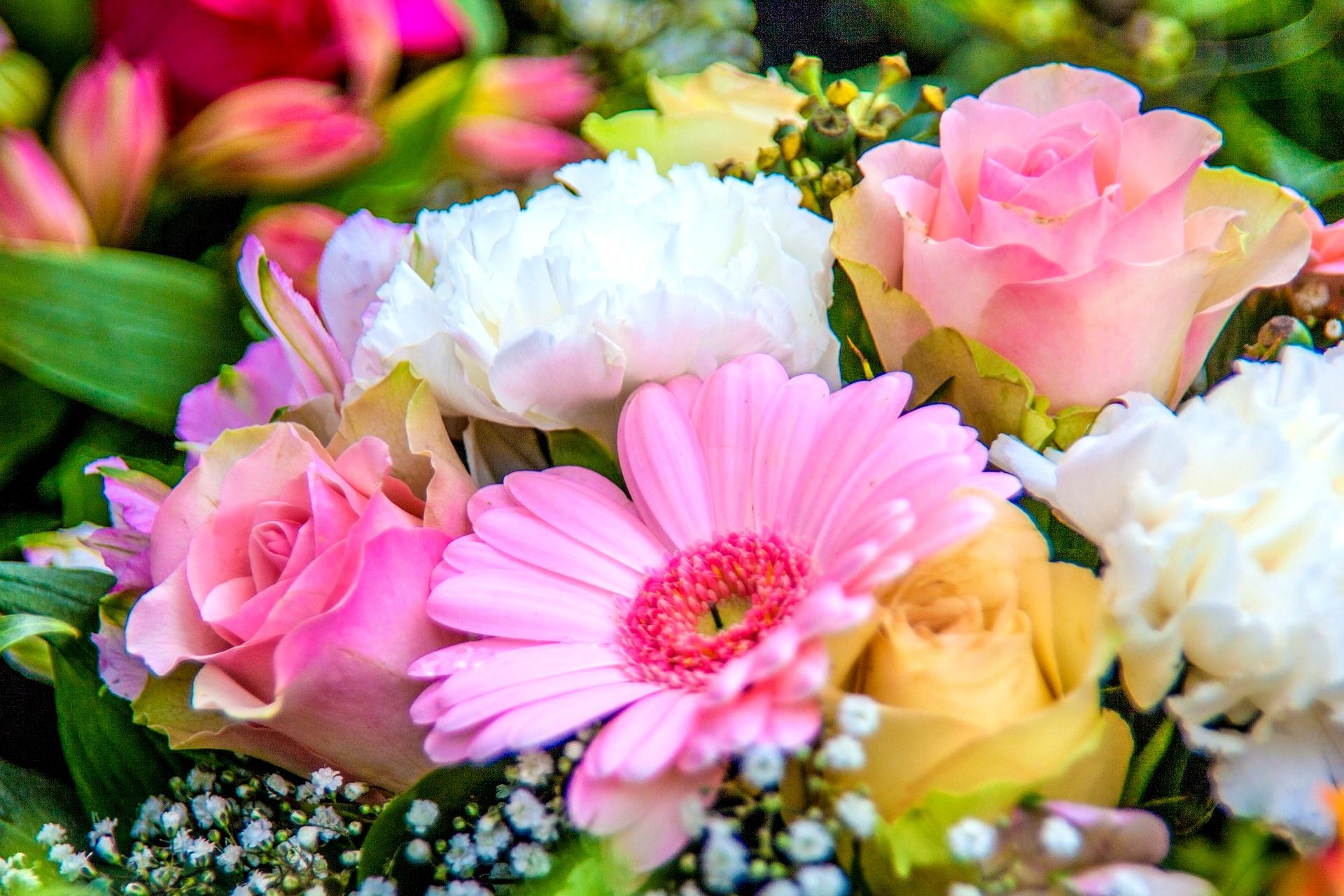 Birth Month Flowers And Their Meanings Real Estate Needs