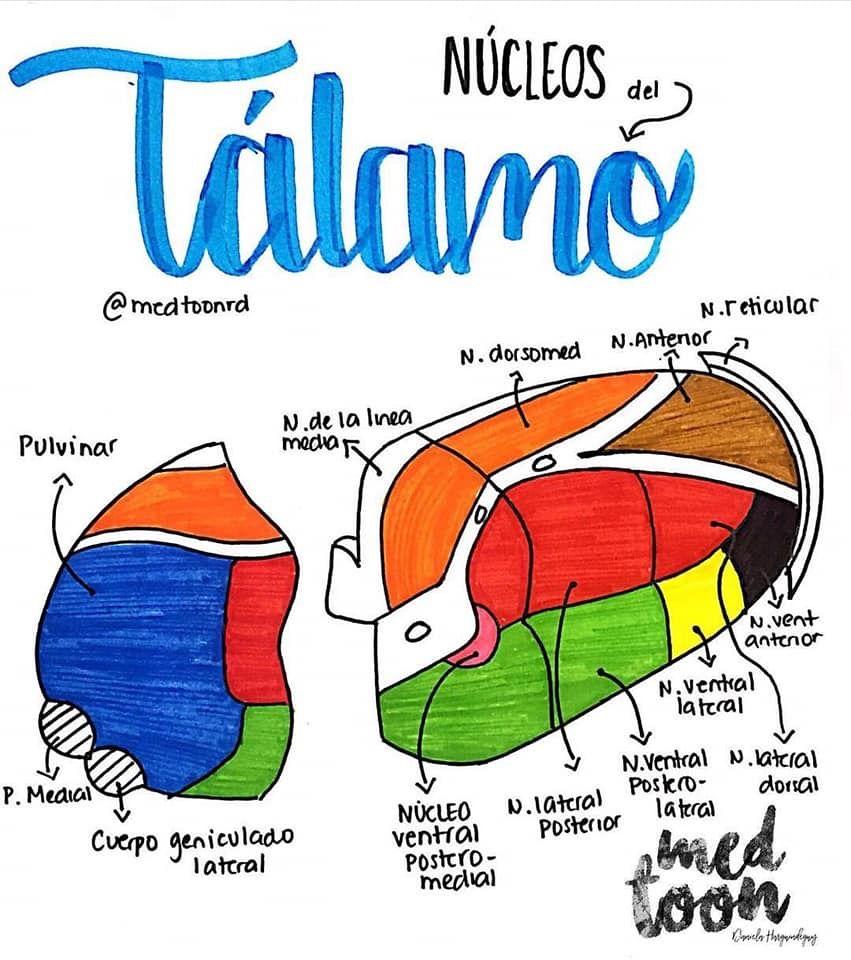 Pin von Camila auf Apuntes Medicina | Pinterest