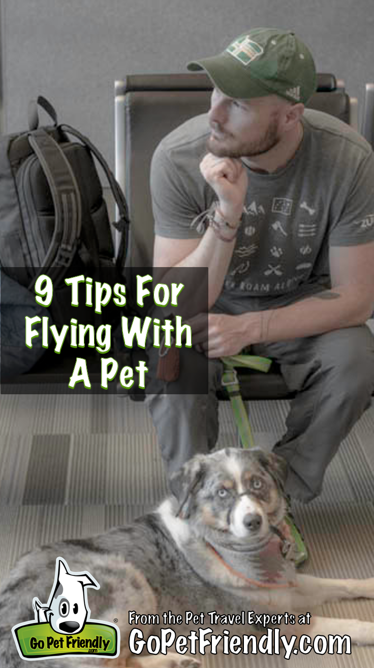 9 Tips For Flying With A Pet Pet Insurance Reviews Flying Dog
