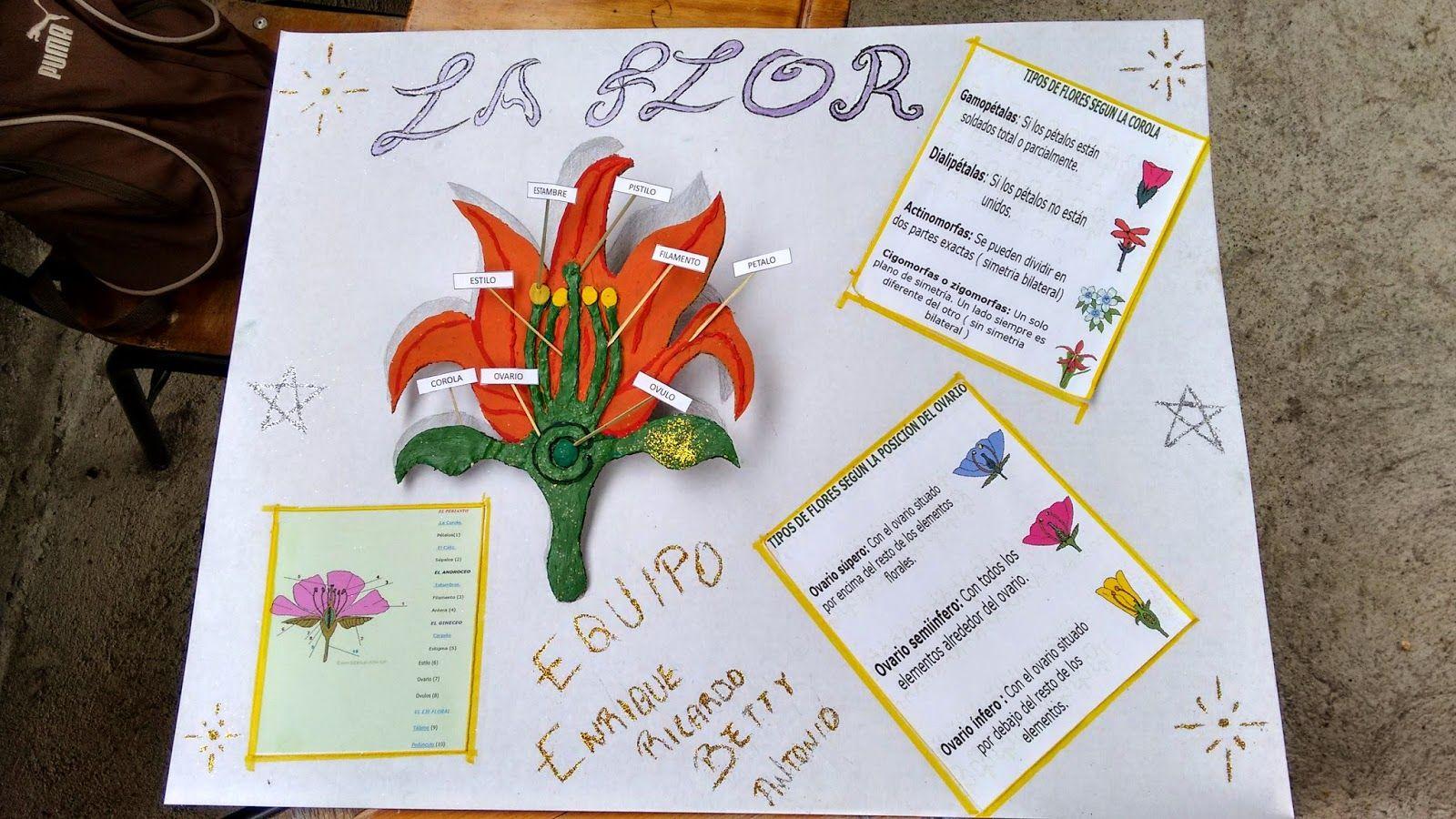 actividades del BOOPL: MAQUETA DE PARTES DE UNA FLOR | plantes ...