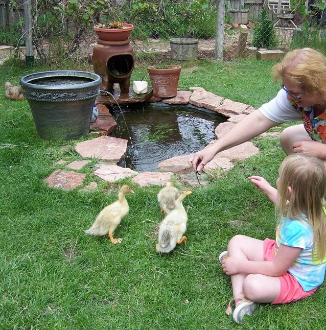 Tiny duck pond with filter fountain small garden ponds for Small outdoor pond filters