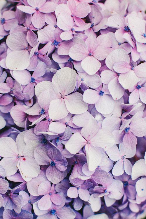 Weddings Flower Backgrounds Hydrangea Wallpaper Flowers Photography