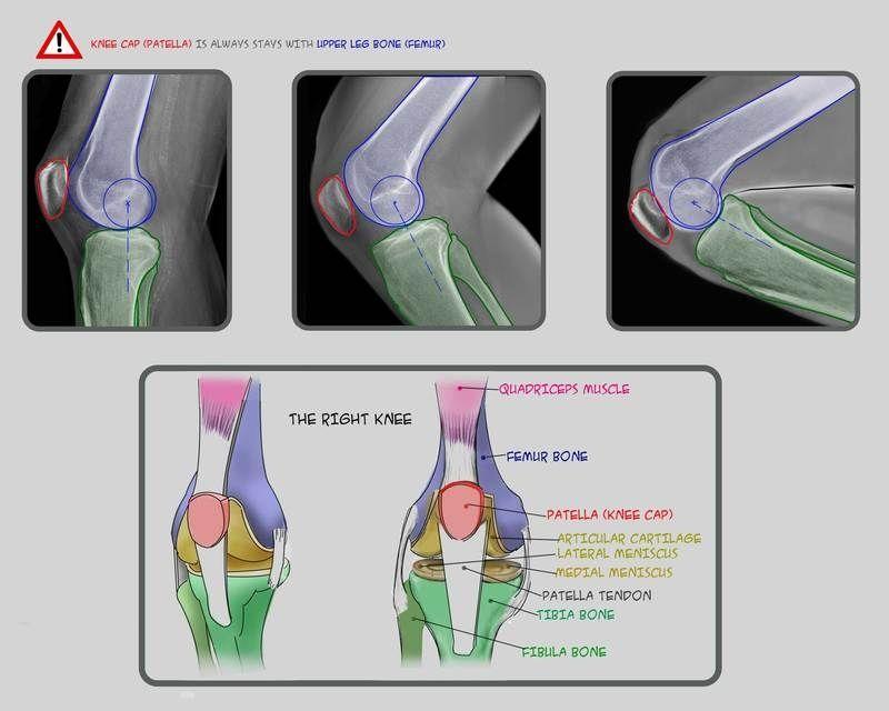 Anatomy For Sculptors - anatomy | Anatomy4Sculptor - LEG & FOOT ...