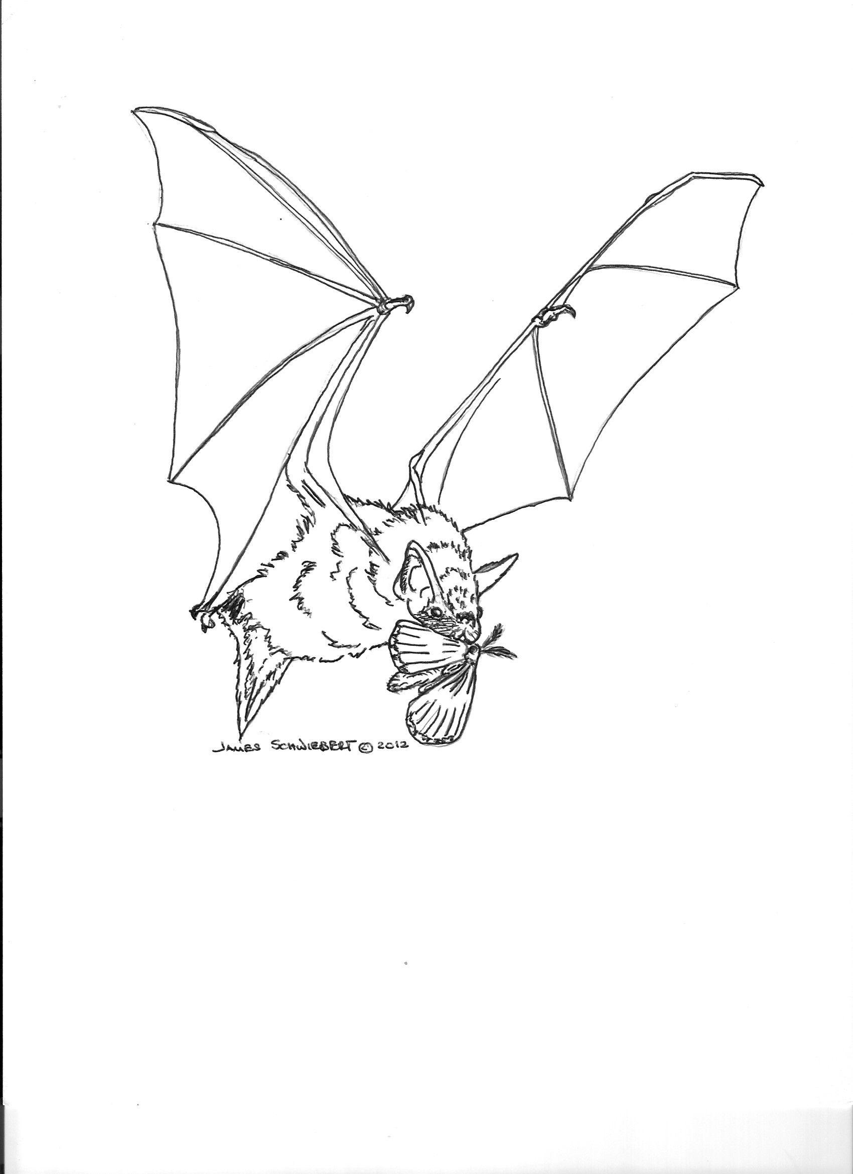 Bat coloring page | Batty goodness | Pinterest | Bats