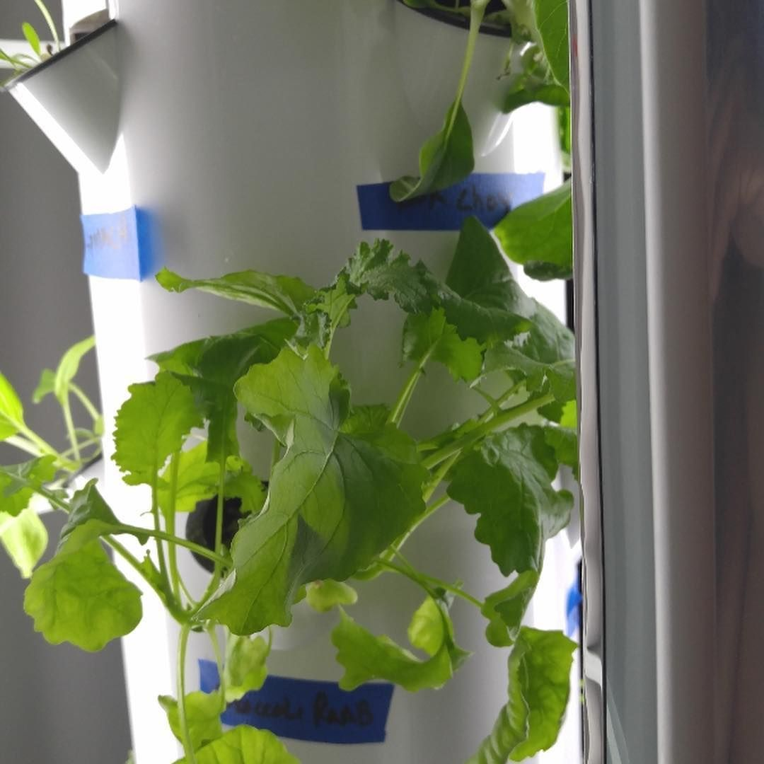 8 Best Choices Of Fast Growing Hydroponic Plants 400 x 300