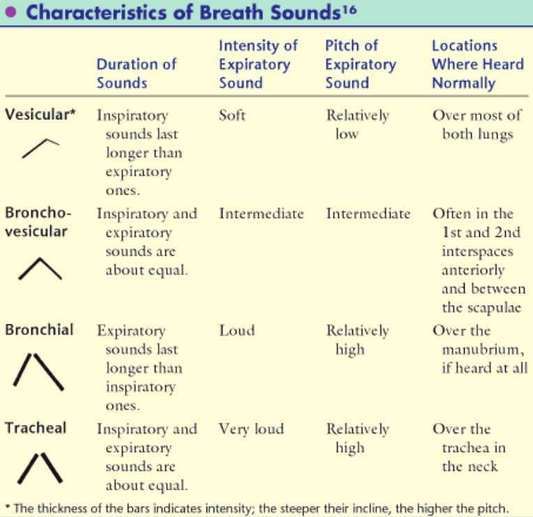 4f852f573ebaa74c3a149ac3c914d2dd characteristics of breath sounds chart nursing pinterest lung