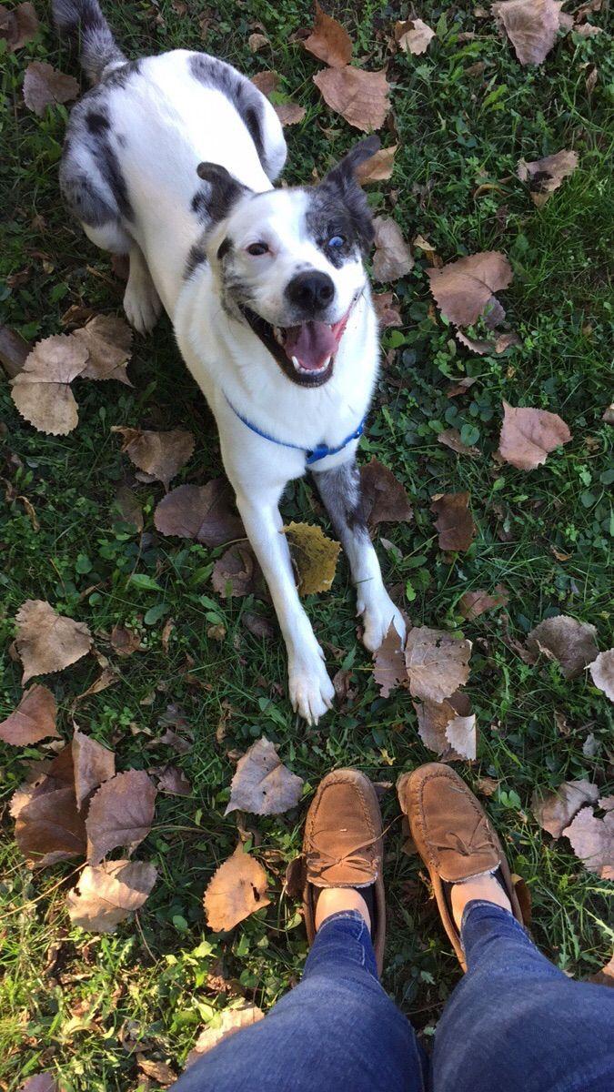 Happy fall dog - http://ift.tt/2xTzalW