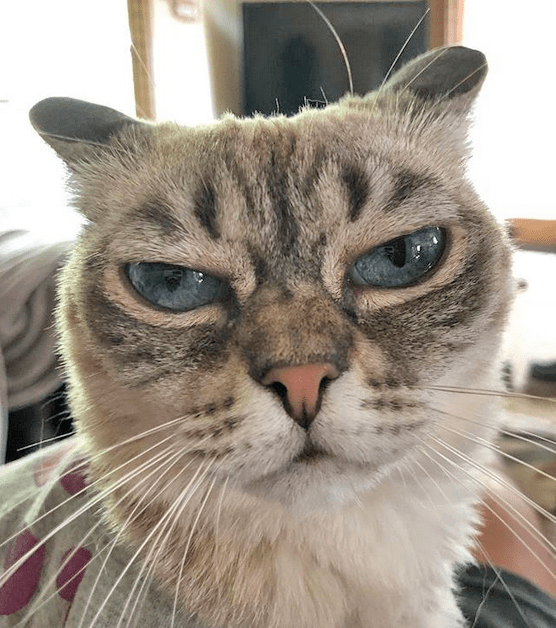Meet The Cat With The Adorably Grumpy Face Who Is Thriving Despite Having Feline Hyperesthesia Syndrome Grumpy Face Cats Feline
