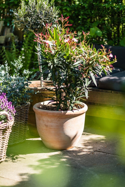 Mediterrane Pflanzen Fur Die Terrasse Der Kleine Horrorgarten Mediterrane Pflanzen Terrasse Blumen Mediterrane Gartengestaltung