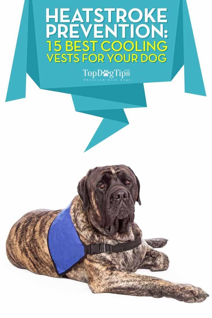 1fa014b7f5551 TOP 15 Best Cooling Vest for Dogs to Prevent Heatstrokes. With the summer  heat upon us, it's time to talk about helping our canine companions stay  cool.