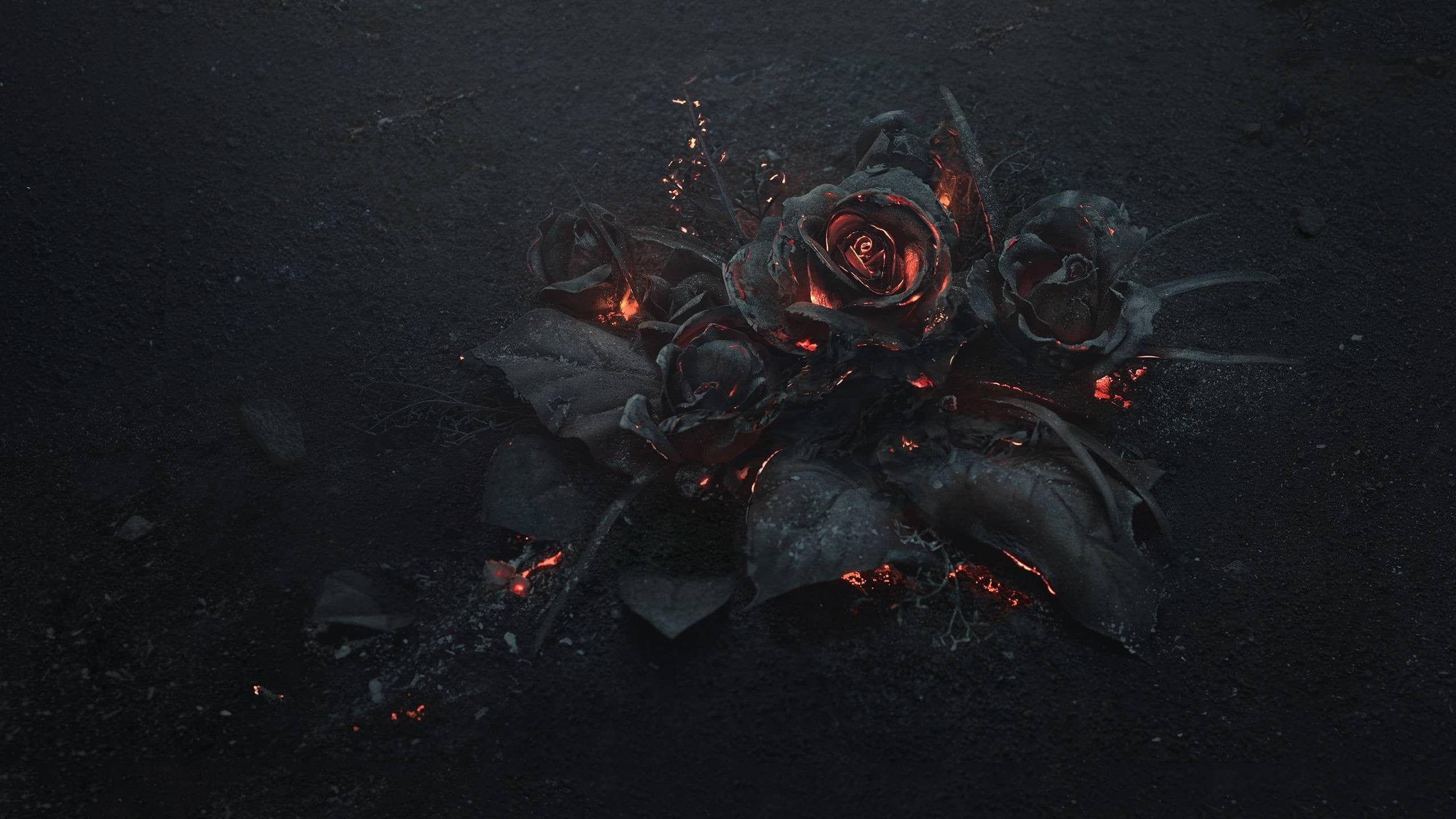 Black Rose Wallpaper Flowers Rose Fire Gothic 2k Wallpaper Hdwallpaper Desktop Rose Illustration Burning Rose Rose Wallpaper