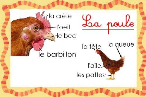 Corps de la deuxi me langue fran ais for Prix d une poule rousse