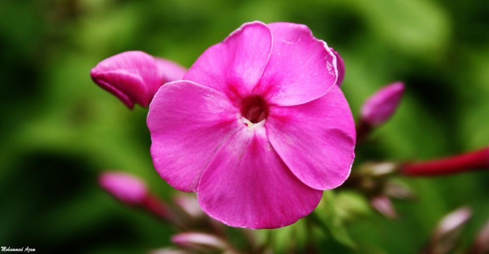 Flower 54 by Mohammad Azam