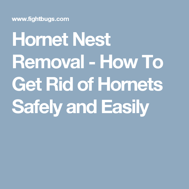 How To Get Rid Of Hornets Safely And