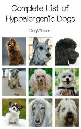 Complete List Of Hypoallergenic Dog Breeds Puppies