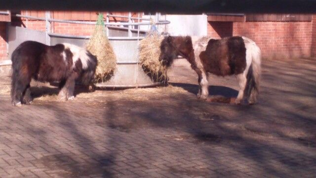 Pony's on Bill Quay farm in Pelaw