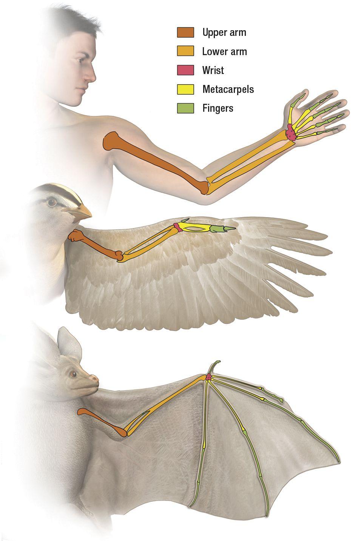 bird wings anatomy - HD940×1433