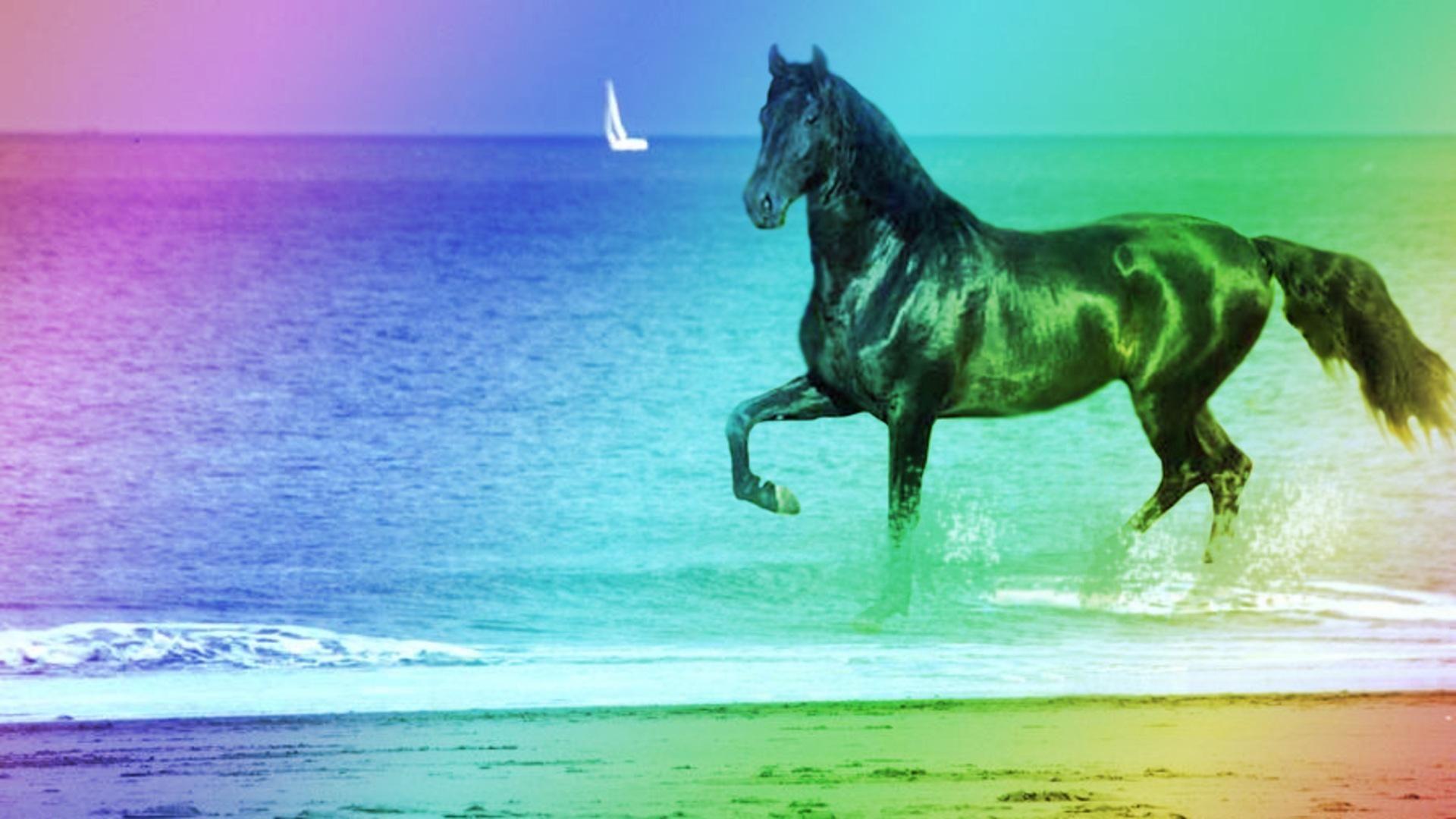 Good Wallpaper Horse Ocean - 4f8bec3068bfc0339db2c9253c0a9cb3  You Should Have_569142.jpg