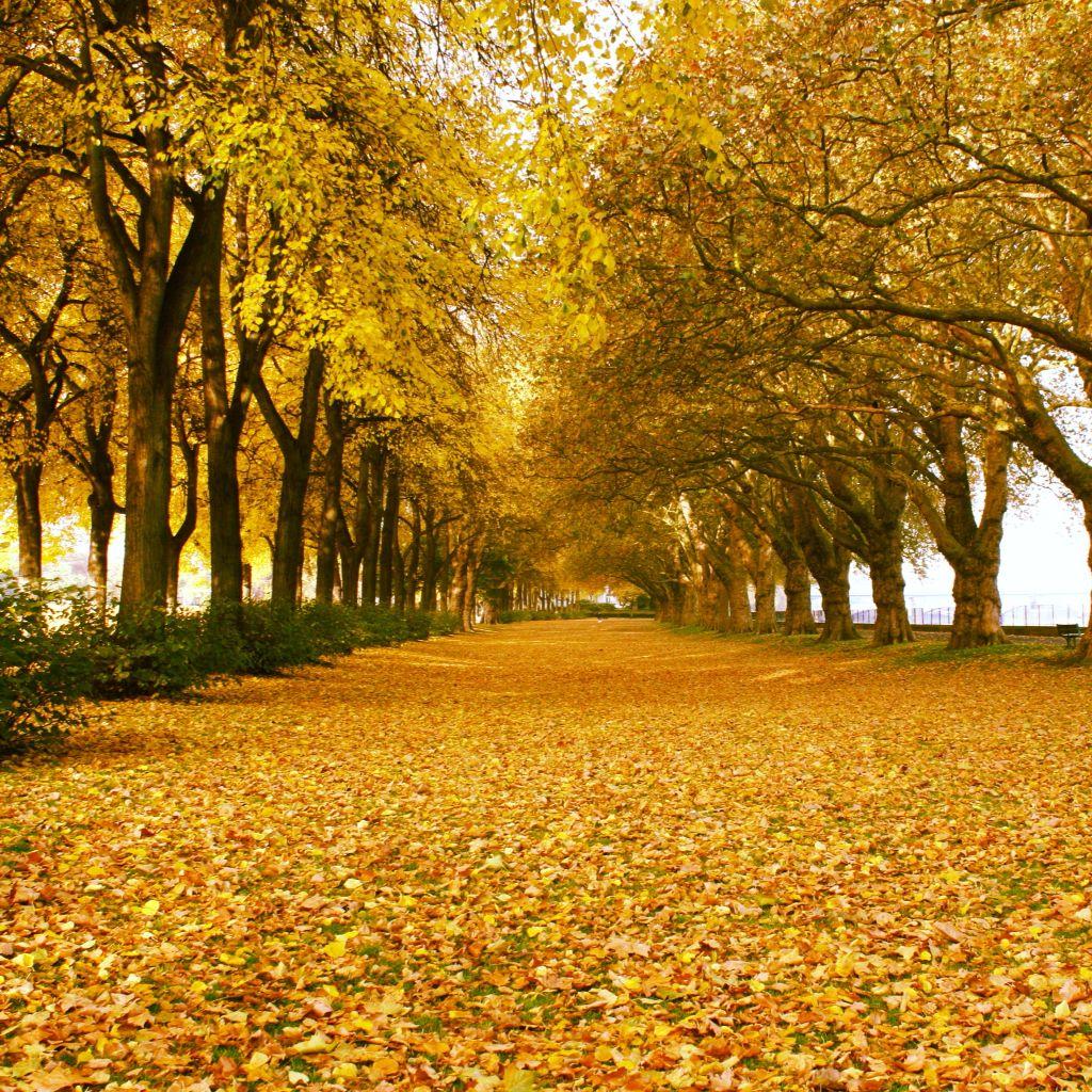 Beautiful golden autumnal morning. Wandsworth Park, Putney London